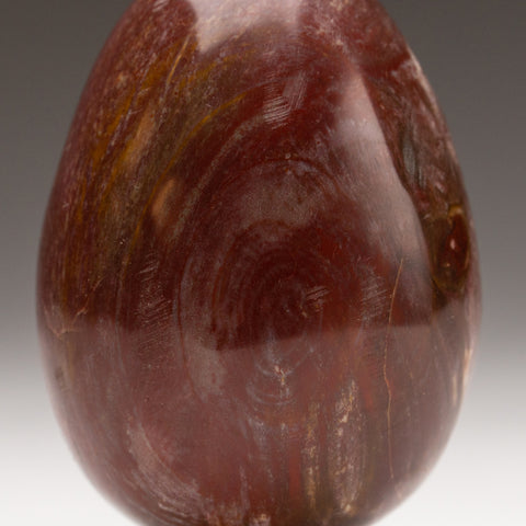 Polished Petrified Wood Egg from Madagascar (277.8 grams)