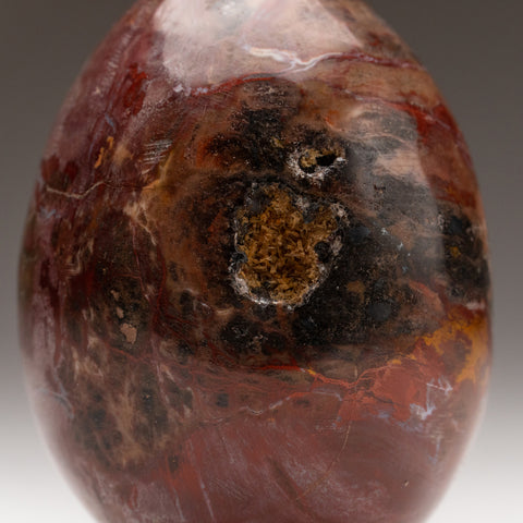 Polished Petrified Wood Egg from Madagascar (389.7 grams)