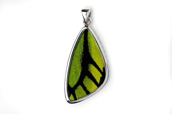 Real Butterfly Wing Pendant in Sterling Silver - Astro Gallery