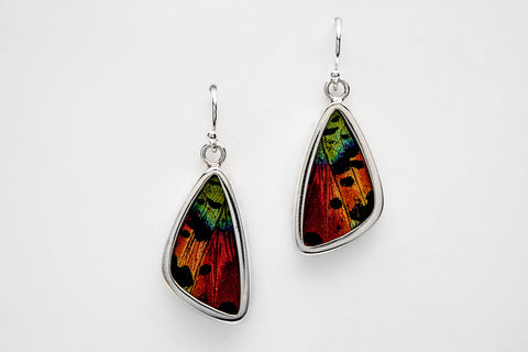 Real Butterfly Wing Earrings in Sterling Silver