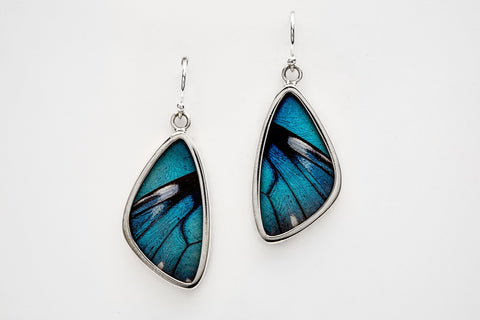 Real Butterfly Wing Earrings in Sterling Silver - Astro Gallery