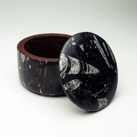 Orthoceras Fossil Round Box (2 lbs)