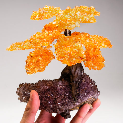 Large Citrine Clustered Gemstone Tree on Amethyst Matrix (The Money Tree)