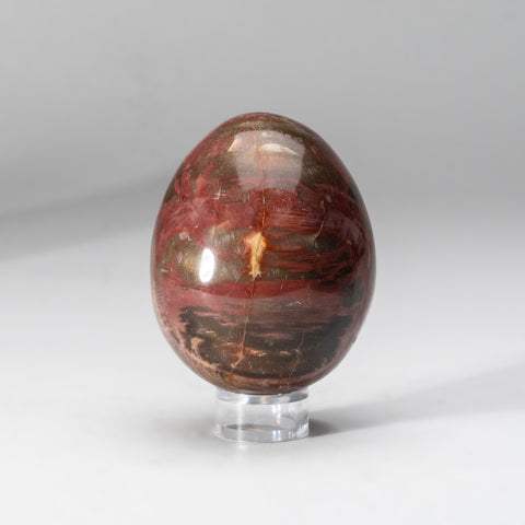 Polished Petrified Wood Egg from Madagascar (390 grams)