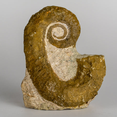 Heteromorph Ammonite (133.2 grams)