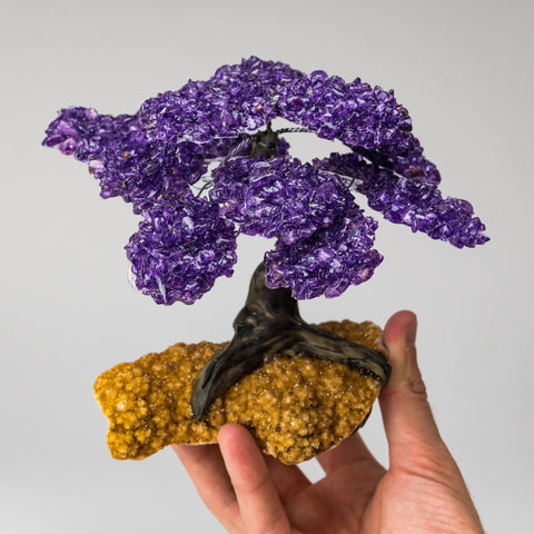 Large - Amethyst Clustered Gemstone Tree on Citrine Matrix (The Empowerment Tree)