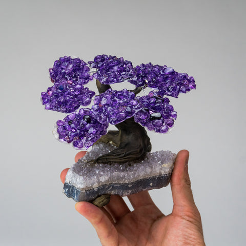 Medium - Genuine Amethyst Clustered Gemstone Tree on Clear Quartz Matrix (The Relaxation Tree)