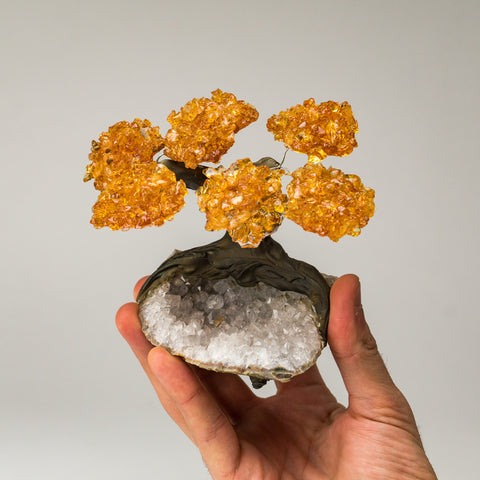 Small - Citrine Clustered Gemstone Tree on Clear Quartz Matrix (The Tree of Prosperity)