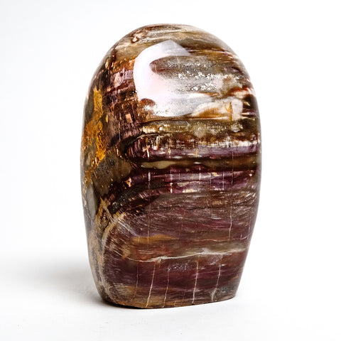 Polished Petrified Wood Freeform from Madagascar (5.5 lbs)