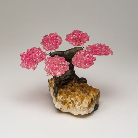Small Rose Quartz Clustered Gemstone Tree on Citrine Matrix
