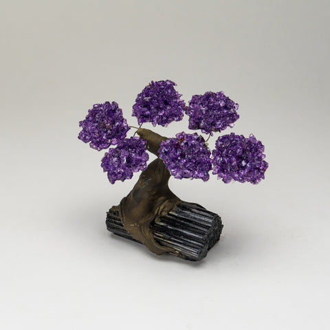 Small Genuine Amethyst Clustered Gemstone Tree on Black Tourmaline Matrix (The Relaxation Tree)