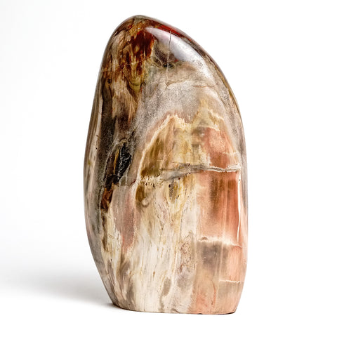 Polished Petrified Wood Freeform from Madagascar (4.5 lbs)