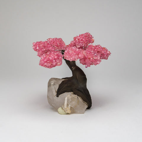 Medium Genuine Rose Quartz Clustered Gemstone Tree on Clear Quartz Crystal Matrix (The Love Tree)