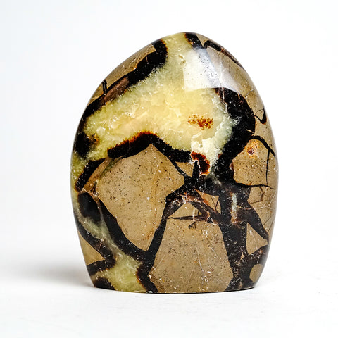 Polished Septarian Freeform from Madagascar (1.28 lbs)