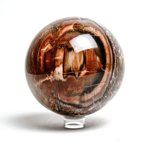 "Polished Petrified Wood Sphere from Madagascar (4.75"", 4.5 lbs)"