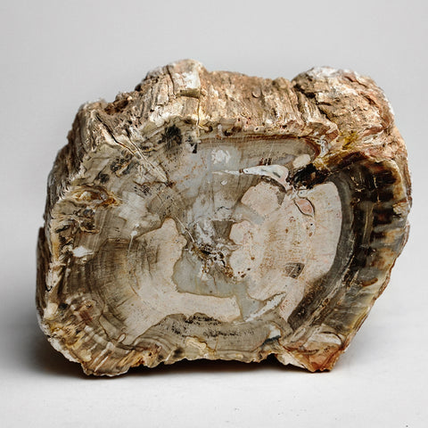 Petrified Wood Slice from Madagascar (2.5 pounds)