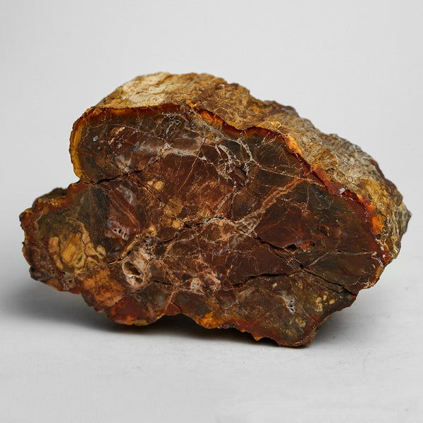 Petrified Wood Slice from Madagascar (2 pounds)