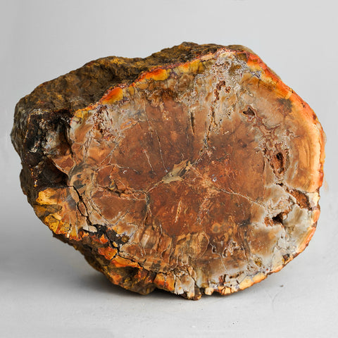 Petrified Wood Slice from Madagascar (3 pounds)