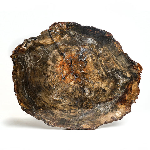 Large Petrified Wood Slice from Madagascar (24.5 pounds)