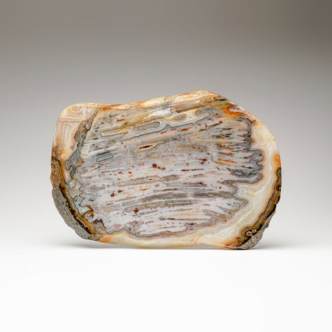Natural Banded Agate Slice from Brazil (3 lbs)