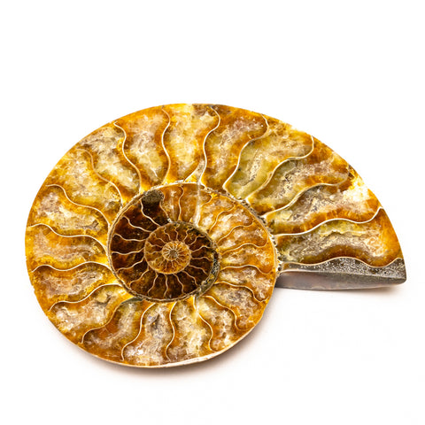Calcified Ammonite Halve From Madagascar (181.4 grams)