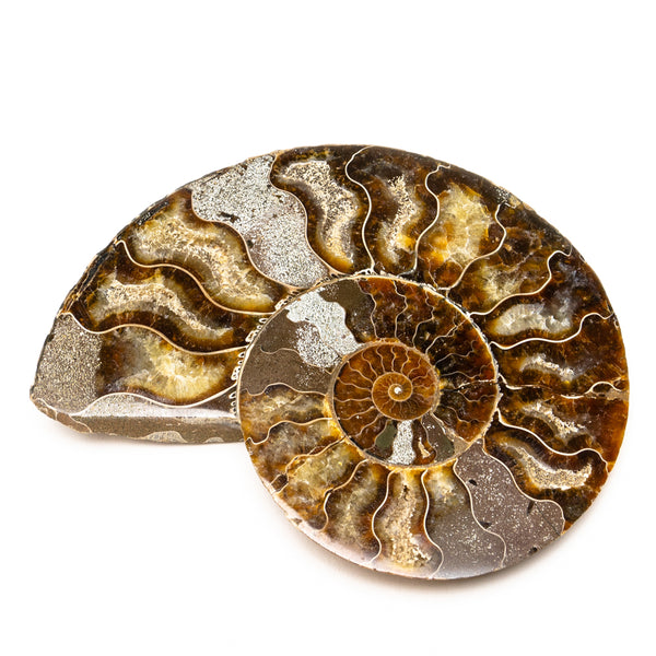 Calcified Ammonite Halve From Madagascar (292.9 grams)