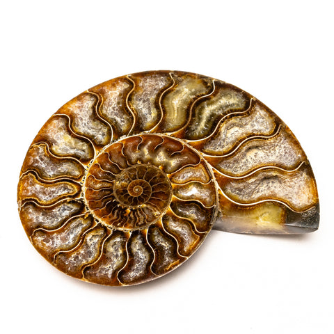 Calcified Ammonite Halve From Madagascar (490.8 grams)
