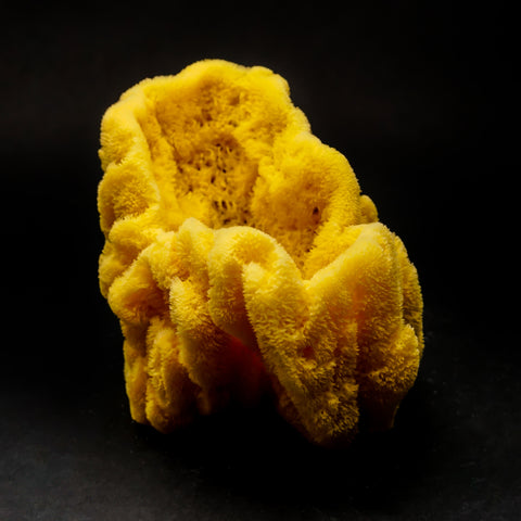 Sea Sponge (63.8 grams)