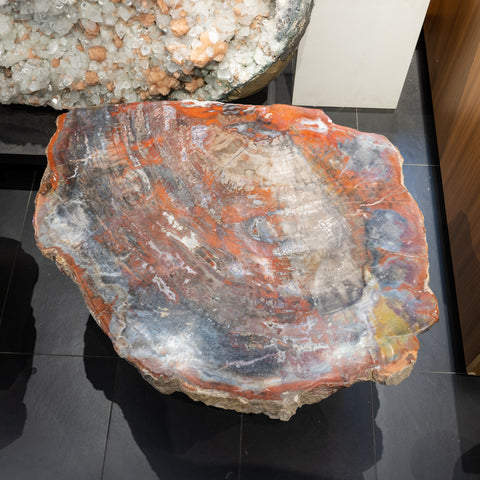 Large Polished Petrified Wood Table Top