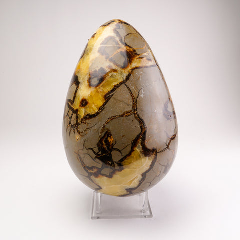 Polished Septarian Egg from Madagascar (31.5 lbs)