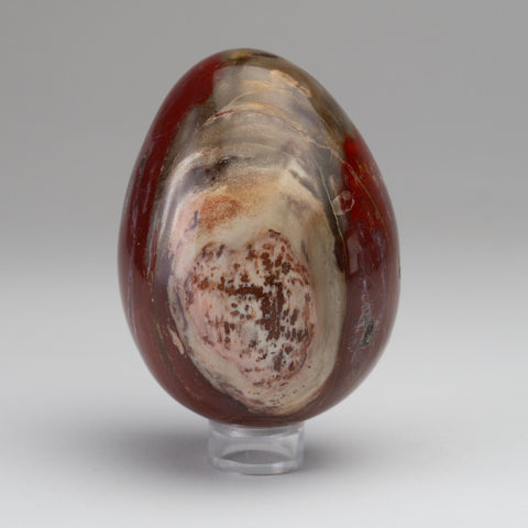 Polished Petrified Wood Egg from Madagascar (1.6 lbs)