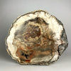 Madagascar Petrified Wood Slice (13 pounds) - Astro Gallery