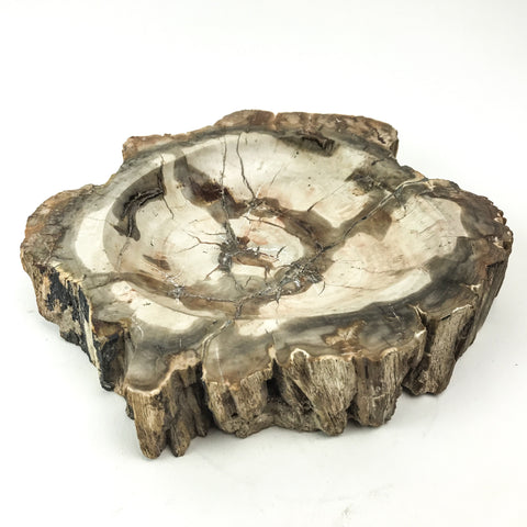 Madagascar Petrified Wood Slice (3.5 pounds) - Astro Gallery
