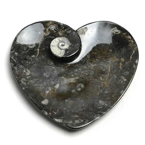 Goniatite Fossil Dish - Medium Heart - Astro Gallery