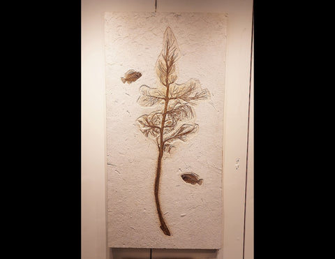 Fossil Palm Frond with Fish from The Green River Formation, Wyoming, USA