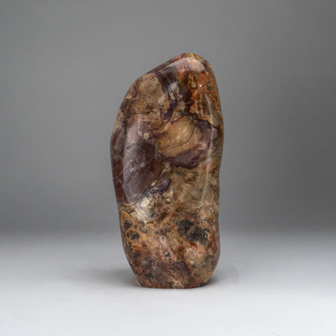 Polished Petrified Wood Freeform from Madagascar (10.5 lbs)