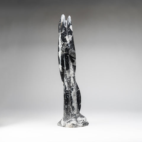 Genuine Polished Orthoceras Fossil Statue (19 lbs)