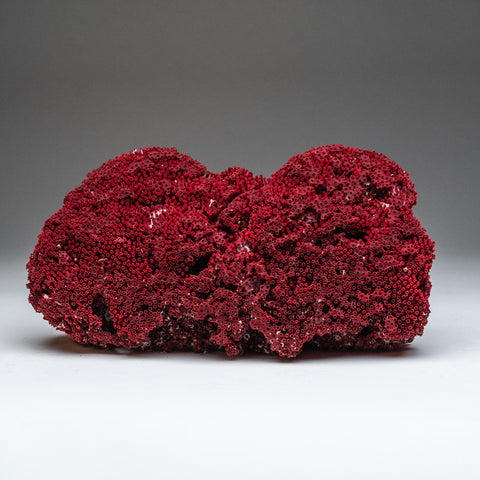 Natural  Red Pipe Organ Coral (2 lbs)