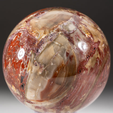 "Polished Petrified Wood Sphere from Madagascar (4"", 3.8 lbs)"