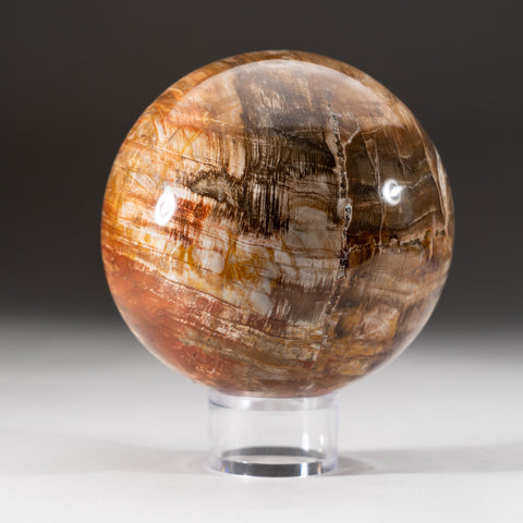 "Polished Petrified Wood Sphere from Madagascar (4"", 4 lbs)"
