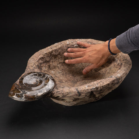 Genuine Fossilized Ammonite Bowl (28.8 lbs)