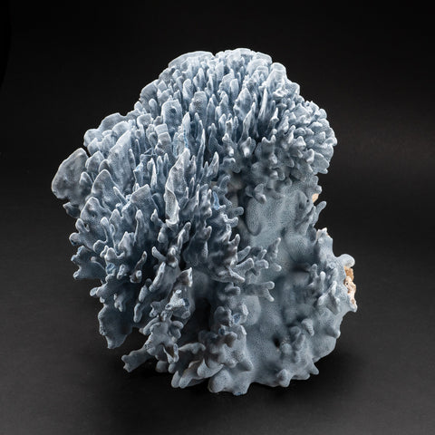 "Genuine Blue Ridge Coral (16"", 25 lbs)"