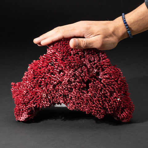 Genuine Red Pipe Organ Coral (.8 lbs)