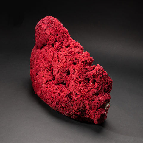 Genuine Large Red Pipe Organ Coral (8.8 lbs)