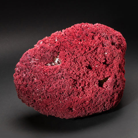 Genuine Large Red Pipe Organ Coral (7.5 lbs)