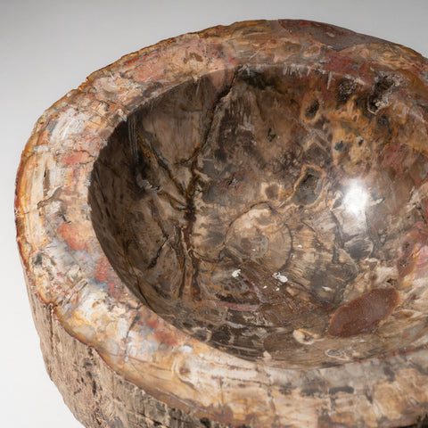 Petrified Wood Bowl from Madagascar (23.3 lbs)