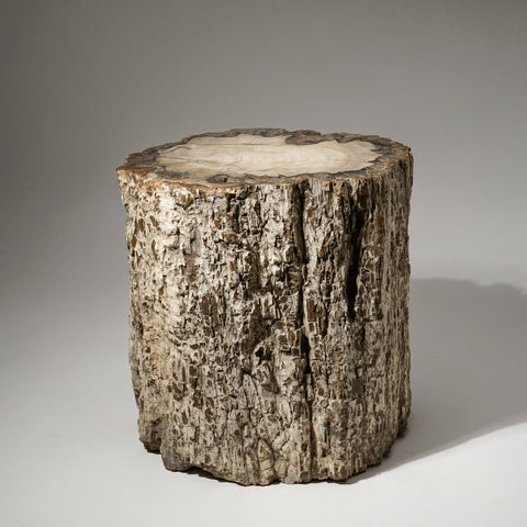 Natural Petrified Wood Log from Madagascar (102.7 lbs)