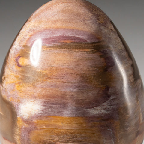 Polished Petrified Wood Egg from Madagascar (1.3 lbs)