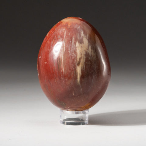Polished Petrified Wood Egg from Madagascar (1.2 lbs)