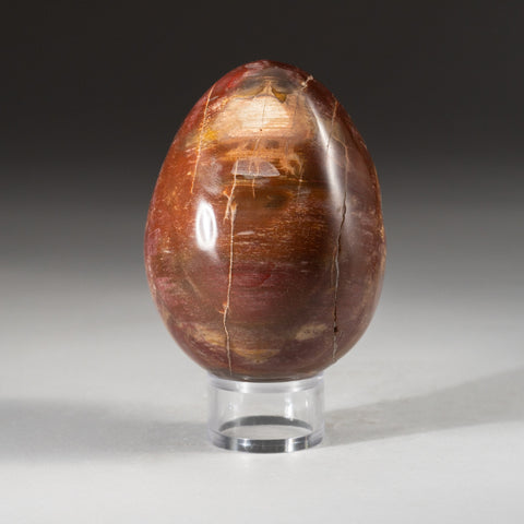Polished Petrified Wood Egg from Madagascar (1.4 lbs)